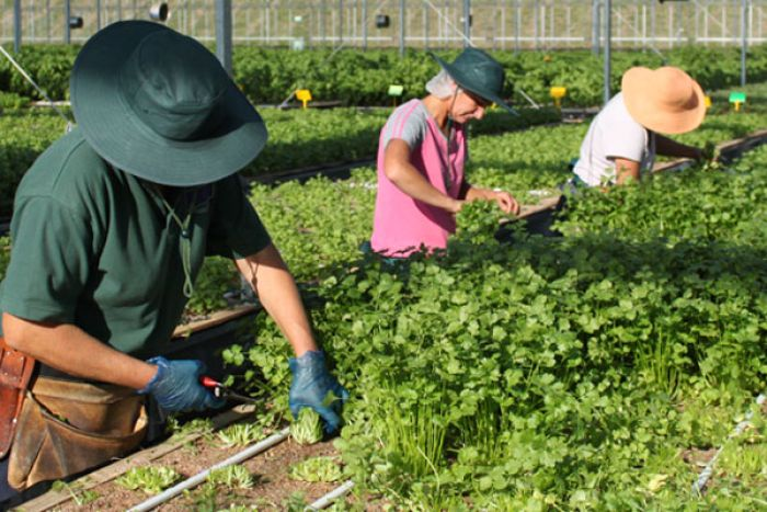 Herbal-Farming