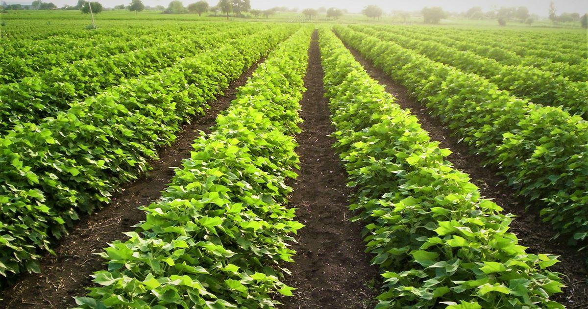 Natural-Farming